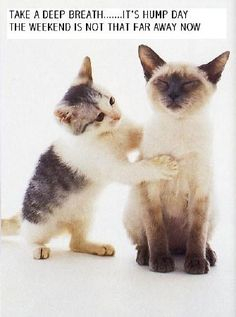 funny wednesday pictures | ... magickalgraphics com graphics wednesday wednesday3 jpg alt days of the
