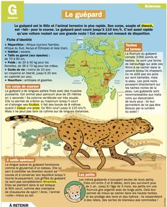 Fiche exposés : Le guépard Science Projects For Kids, Science For Kids, Flags Europe, French Education, French Expressions, French Phrases, French Resources, French Class, Science Biology