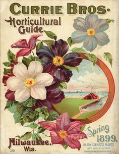 Vintage Seed Catalog - Currie Bros. Horticultural Guide Spring 1899