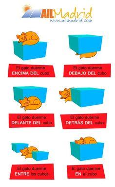 El verbo ESTAR y los adverbios de lugar. ¿Dónde está el gato?