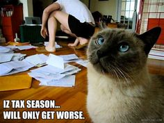 Tax Day Funny Cat Meme. This looks like my office! #taxday #catmeme #lolcat #taxes #catsfunny #catfunny #cats Silly Pictures, Funny Animal Pictures, Taxes Humor, Funny Cats, Funny Animals, Tax Day, Healthy Pets, Investment Property, Cat Memes