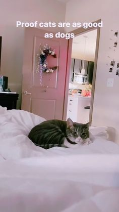 Animals Discover The purest thing youll see today Fluffy Kittens, Cute Cats And Kittens, Kittens Cutest, Cute Little Animals, Cute Funny Animals, Funny Cats, Beautiful Cat Breeds, Beautiful Cats, Animals Beautiful