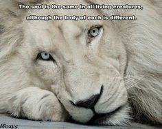 Possible idea for a lion tattoo and quote. Love this