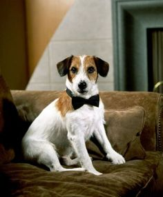 1993-2004) The famous dog actor Moose (and then his son, Enzo) played Eddie, the Jack Russell terrier who belongs to Martin and has a staring fixation for Dr. Crane.