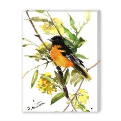 size: Giclee Print: Baltimore_Oriole by Suren Nersisyan : Travel This exceptional art print was made using a sophisticated giclée printing process, which deliver pure, rich color and remarkable detail. Watercolor Bird, Watercolor Animals, Watercolor Paintings, Watercolor Hummingbird, Watercolours, Painting Frames, Painting Prints, Art Prints, Oriole Bird