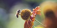 Why Honeybees Don't Have A Chance In The Midst Of Pesticides   The Huffington Post