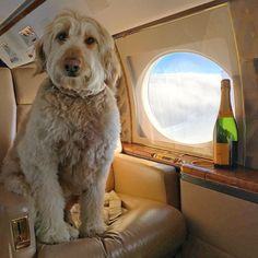 Small, Furry and Filthy Rich: The Rich Dogs of Instagram