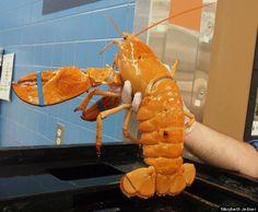 libbie lobster