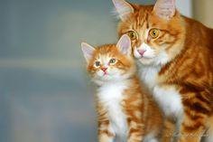 top-cat.org/blog