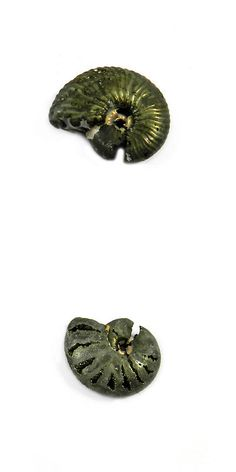 Ammonite 181078: 1Pcs Rare Product 21Mm Russian Pyrite Ammonite Fossil Jewelry Gemstone Gs00825 -> BUY IT NOW ONLY: $50.38 on eBay!