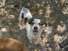 MARLEY - Adopta-me  Cão - Rafeiro Comum  Idade: Jovem Sexo: Macho Tamanho: Pequeno Pêlo: Preto e Branco