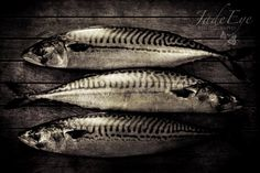Fish Still Life Photography three fish on a by JadeEyePhotography, $25.00