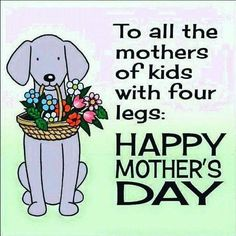 To all the mothers of kids with four legs.Happy Mother's Day cat mom mothers day dog mother quotes mom quotes happy mother's day mother's day mother greetings flowers for mother mother graphics. Happy Mothers Day Friend, Happy Mothers Day Pictures, Happy Mom Day, Mothers Day Poems, Happy Mother Day Quotes, Mother Day Wishes, Mothers Day From Dog, Mother Quotes, Happy Quotes