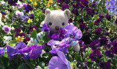 Violets. Herbal Academy