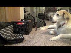 ▶ Rupert vs The White Stripes - YouTube