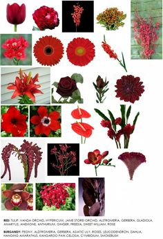 Red Flower guide.