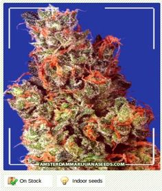A  hybrid of premium Sativa and Indica, Caramelicious delivers the heavy Indica-like buds but produces an energetic soaring Sativa-like high when smoked.