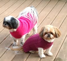Roxy n Molly. Shihtzus