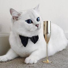 este-gato-tem-os-olhos-mais-bonitos-do-mundo-animal-7.jpg (700×700)