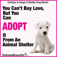 The Animal Rescue Site, Adopt shelter pets!  #TheAnimalRescueSite