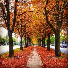 We celebrate #autumn in #Brussels with this great pic by @hnindito Send us your pics using the #visitbrussels http://instagram.com/visitbrussels and join our contest The Pic of the Month & get a meal for 2 in http://www.espritdesel.be #espritdesel and good luck! :D