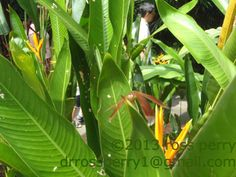 Singapore Vacation, Vacation Trips, Plant Leaves, Island, Plants, Islands, Plant, Planets