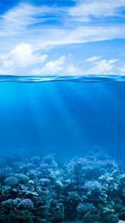 Under the sea Tumblr Backgrounds, Colorful Backgrounds, Iphone Backgrounds, Phone Photography, Nature Photography, Water Background, Water Resources, Nature Photos, Under The Sea
