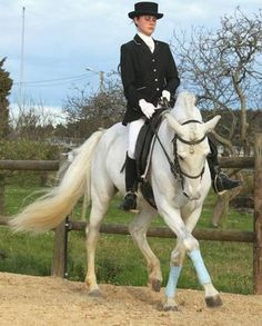 HE4459990 - PRE Doma Clasica Equestrian Fashion, Equestrian Style, Grey Horses, Spain, Babies, Girls, Animals, Horses, Horses For Sale