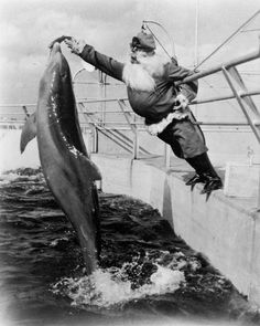 Santa Claus feeds the dolphins, 1950's  °