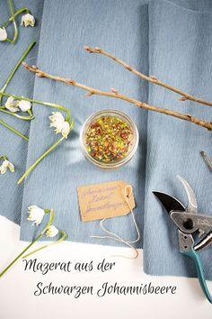 Der Star der Gemmotherapie – Die Knospen der Schwarzen Johannisbeere - Healing, Star, Tableware, Green, Diy, Archive, Fitness, Herbal Extracts, Home Health Remedies