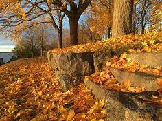 Autumn in Vaasa, Finland Autumn Photos, Finland, Wreaths, Home Decor, Fall Cover Photos, Homemade Home Decor, Door Wreaths, Deco Mesh Wreaths, Interior Design