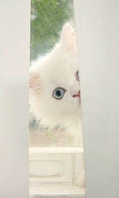 Peek-a-boo....I see you~~♥ (by ~♥ Amy on Flickr)