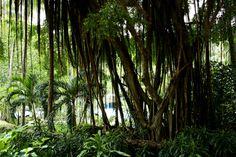Jungla tropical