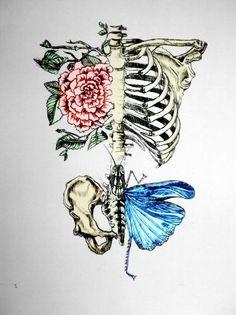 esqueleto flor borboleta linda ilustração