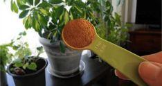 Metti 1 Cucchiaino Di Cannella in Polvere Nelle Tue Piante e Guarda Cosa Succede