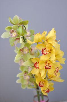 Orhidee Cymbidium cu livrare în Moldova Moldova, Tropical, Plants, Green, Planters, Plant, Planting
