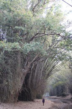 a stream in India