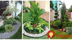 Prekrásne nápady na zelené záhradné ostrovčeky: Tieto zákutia premenia váš dvor na kúzelné miesto – sú krásne celú sezónu! Plants, Flora, Plant, Planting