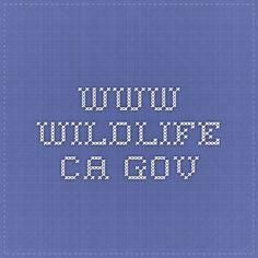 California Falconry License Guide