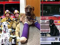 """Vote for Smokey!   Smokey was rescued from a fire as a puppy and revived using a Project Breathe™ donated pet oxygen mask, and now is a finalist to win a guest spot on the TV show """"Chicago Fire"""". Go Smokey!"""
