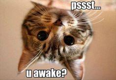 psssst...u awake?