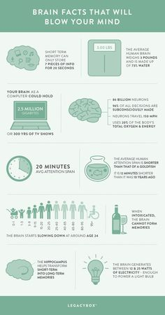 25 Brain Facts that Will Blow Your Mind (Infographic is part of Science Facts Infographic - The human brain doesn't look like much Nevertheless, it is one of the most complex organs Here are a few brain facts you may not know Brain Science, Science Facts, Fun Facts, Human Body Facts, Brain Memory, Brain Facts, Brain Anatomy, Neuroplasticity, Mental And Emotional Health