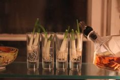 Don't throw away your scallion roots! - Imgur