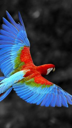 Beautiful macaw ✿⊱╮