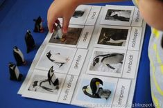 learning about Antarctica and penguins