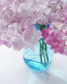Hydrangeas in a blue vase