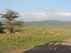 Kenya lodges and camps, accommodation, luxury safari camps, luxury safari lodges. http://yhakenyatraveltoursandsafaris.emyspot.com/pages/kenya-camps-lodges.html#page2