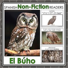 Forest Animals Non-Fiction Spanish Readers - El Búho The Owl  These Spanish Non-Fiction Readers were created to build student background knowledge and vocabulary, while maintaining simple easy-to-follow text for readers beginning to read.   Keywords: Forest Animals, Animales del Bosque, Spanish Emergent, Guided Reading Books, Spanish Books, Libros de la Lectura Guiada, Libros de No-Ficción, Non-Fiction Books, El Búho, The Owl, Spanish Immersion