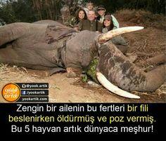 Hayvan bile olamayanlar... Interesting Information, Pet Care, Karma, Elephant, Creatures, World, Animals, Books, Animales