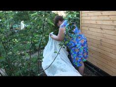 Огурцы. Посадка огурцов.Часть 2. Новый способ. Высокая урожайность. - YouTube